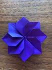 Fleur plate violette