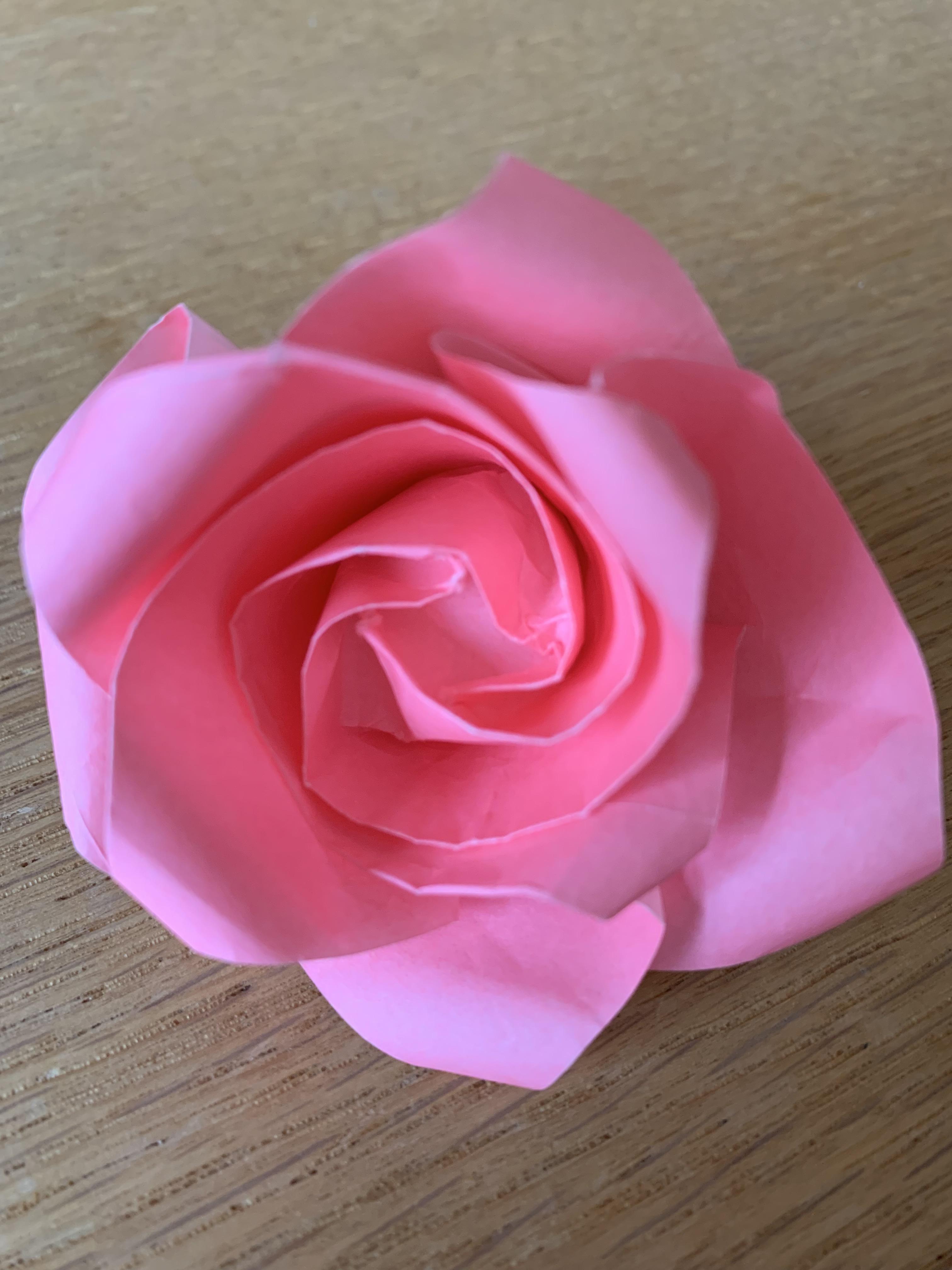 Rose rose sur fond bois clair